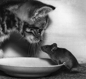 mousecat03.jpg